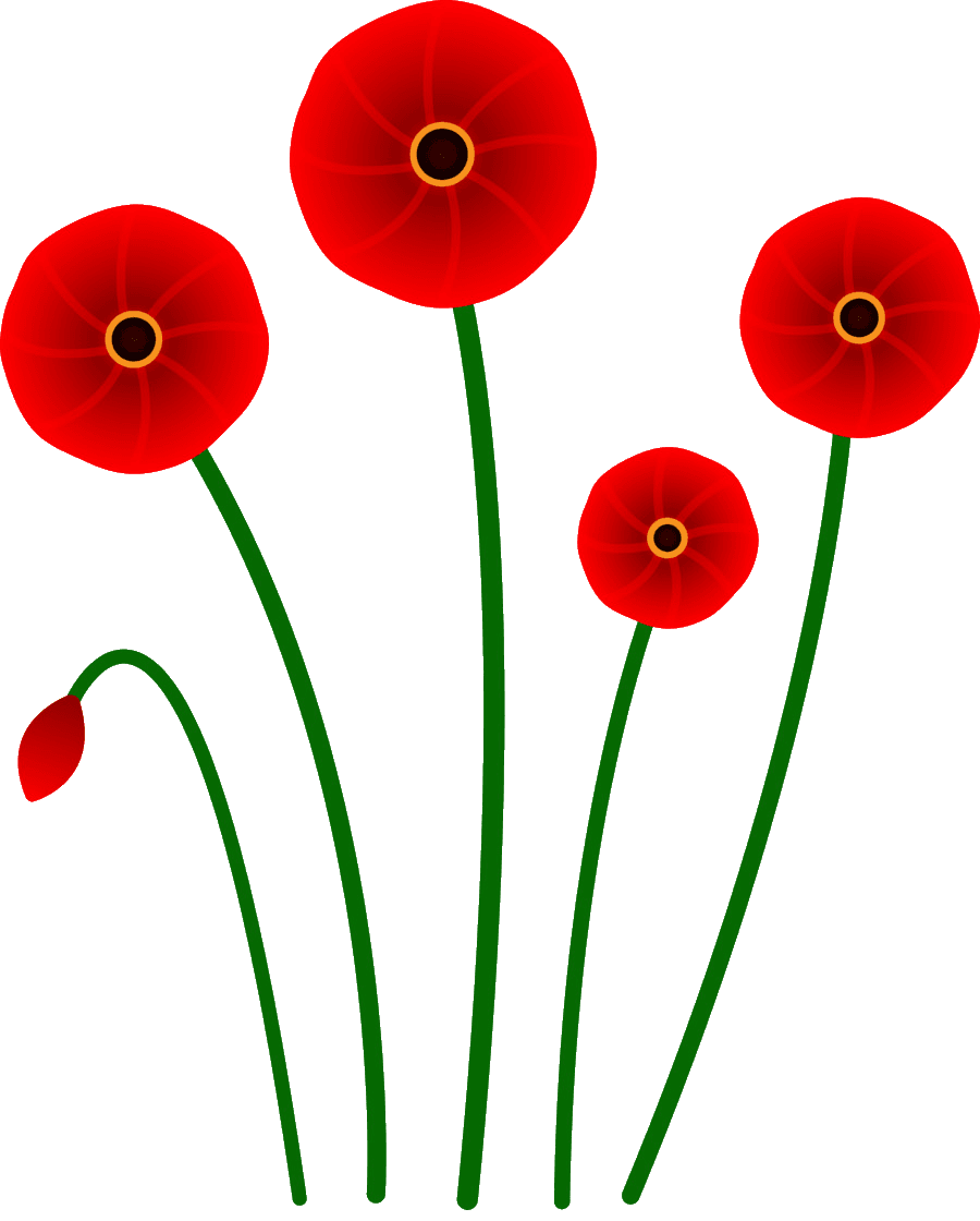 poppy flower for veterans day