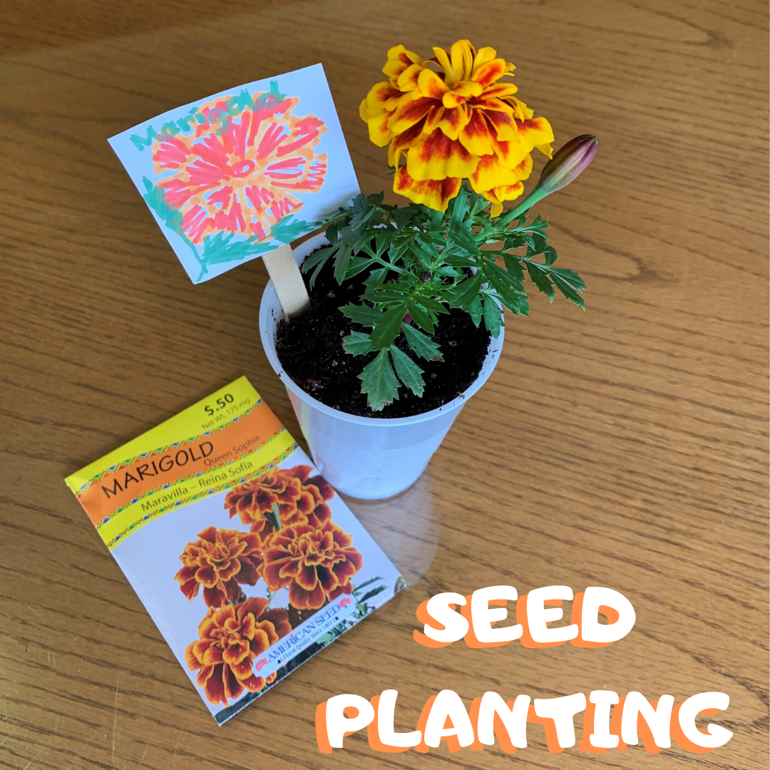 Seed Planting